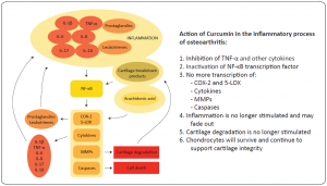 Curcumin in osteoarthritis