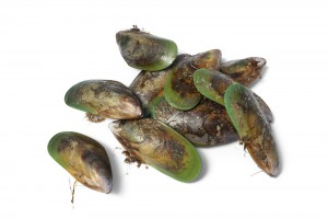 liquid Green-lipped mussel